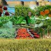 بررسی ورود فناوری به استارتاپهای کشاورزی و باغبانی در دانشگاه آزاد