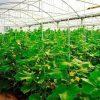 ساخت ۶هکتار گلخانه در سیستان و بلوچستان
