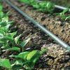 دولت برای هر هکتار آبیاری قطرهای ۱۳ میلیون تومان یارانه میدهد