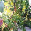 قزوین، رتبه نخست پوشش بیمه باغها در کشور